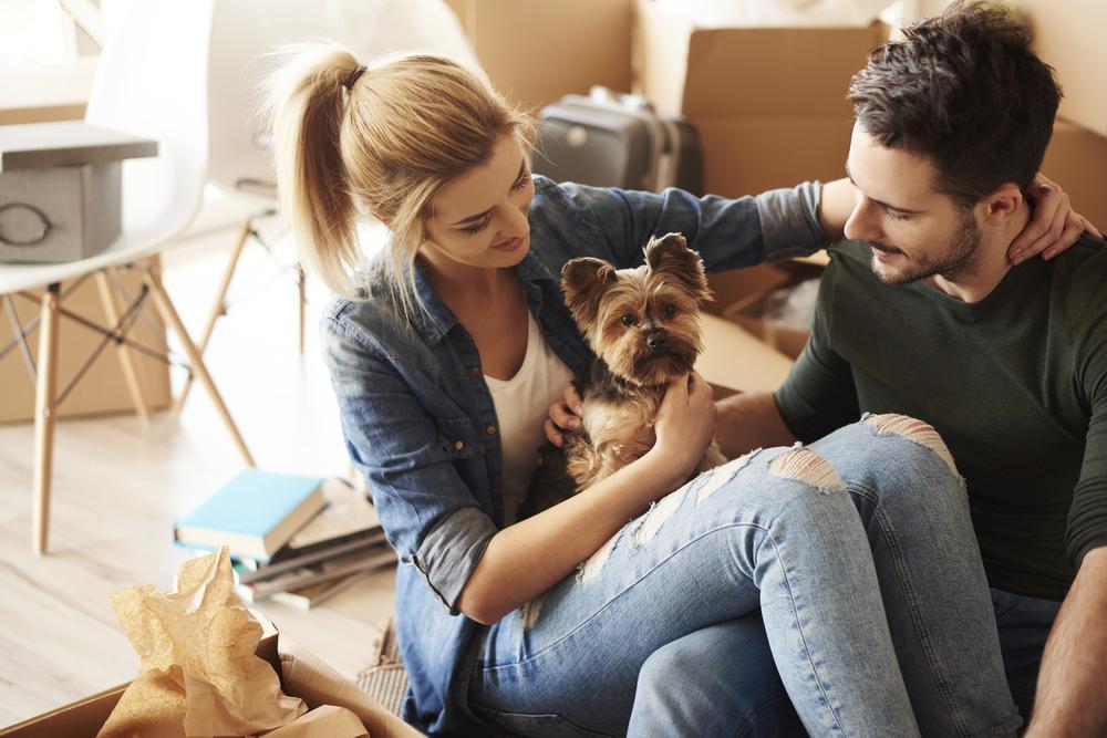dog in rental property